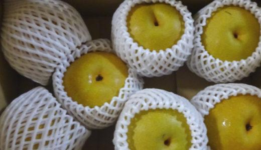 【西原梨園】南国鹿児島さつま町の甘さたっぷり梨!果汁いっぱいでビックリw